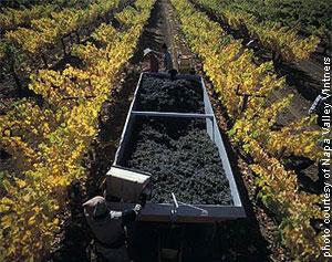 Napa Valley Harvest 2006